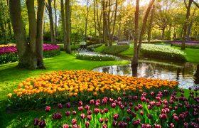 Keukenhof Tulip Park Holland